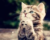Katinėlis meldžiasi