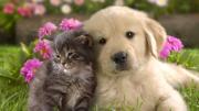 Kačiukas ir šuniukas draugauja